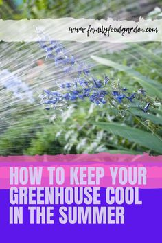Greenhouses just get hotter and hotter in the summer unless we make an effort to cool them down. Here are some tips and tricks on how to keep your greenhouse cool in the summer. Large Greenhouse, Home Greenhouse, Container Gardening, Gardening Tips, Indoor Gardening, Flower Gardening, Vegetable Gardening, Underground Greenhouse, Shading Techniques