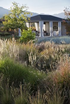 """""""Ornamental grasses are soft, move in the wind, don't use as much water as flowering plants, and have a country agrarian feel,"""" says Lewis. Scott Lewis vineyard retreat. Northern California. Photo: Matthew Millman"""