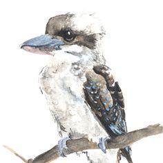 Image result for watercolour paintings of kookaburra