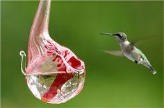 Glass Hummingbird Feeder.