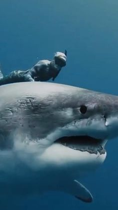Shark Pictures, Shark Photos, Animal Pictures, Beautiful Sea Creatures, Animals Beautiful, Beautiful Nature Pictures, Great White Shark, Ocean Creatures, Nature Animals