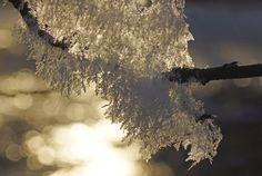 Talven valossa, ph Juhani Harkas