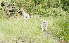 Wild Wood en Provence: a dog