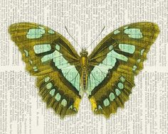 butterfly  olive aqua  vintage artwork printed on page by FauxKiss, $10.00