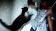 Video uploaded to YouTube shows how a cat attacks his owner who dares to play some lovely music on her flute.