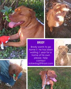 Brody was saved from a euth list only to be in boarding  pls help him go home