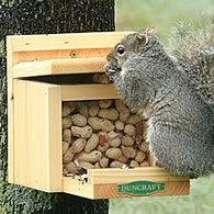 squirrel feeder - this might be just the thing to keep these rascals from getting into the lodge...