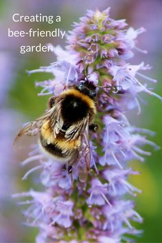 No matter how small your garden, you can do your bit to help bees thrive. Here are some ideas for what you can do to make your garden bee-friendly.