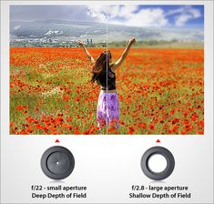 great lesson on aperture and depth of field