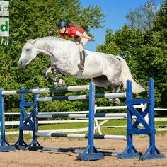 Check out Martyna Rynkiewicz Showjumper on fb for more