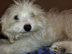 URGENT & IMMEDIATE Need For Toby | Pet Expenses - YouCaring.com >>Please read/share and help if you can, 3 broken legs wow, that hurts just to think about it and I only have 2 to worry about.