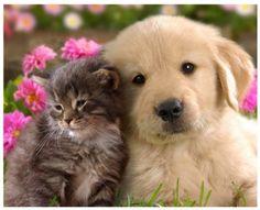 Cat and Dog Mosaic Diamonds Kit, Animal Full Square Diamond Mosaic DIY 3D Embroidery Cross Stitch Kits Home decor 1supply.etsy.com by 1supply on Etsy