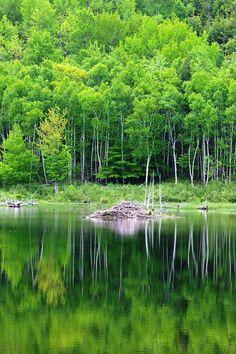Beaver Dam, Acadia National Park