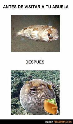 New memes en espanol spanish jokes frases 60 ideas Spanish Posters, Spanish Jokes, Funny Spanish Memes, Funny Jokes, Spanish Vocabulary, Funny Kids, Funny Cute, Comic Foto, Mexican Problems
