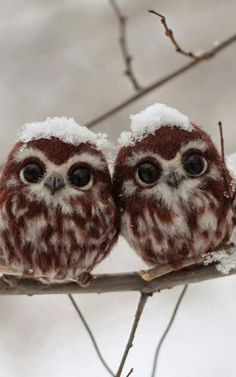 baby owls - [Thanks to Star Dunlap for sending me a differently-sized version of this sweet pin. Cute Birds, Cute Owl, Pretty Birds, Baby Owls, Cute Baby Animals, Funny Animals, Owl Photos, Owl Pictures, Beautiful Owl