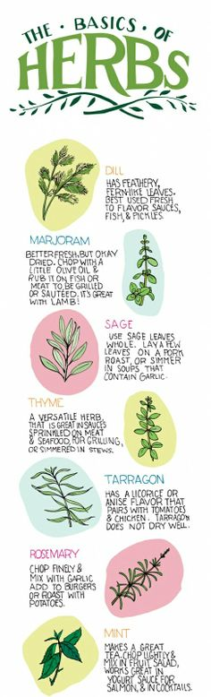 A Pair of Pears: The Basics of Herbs