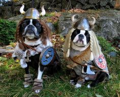 Yes! Viking dogs-must find these for my pugs! Again it just makes sense!