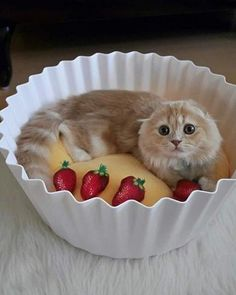 >>>Cheap Sale OFF! >>>Visit>> Who wants some Cupcake? Want more cute kittens? Puppies And Kitties, Cute Cats And Kittens, Kittens Cutest, Cute Cat Gif, Cute Funny Animals, Funny Cats, Cats Humor, Cat Jokes, Funny Animal Videos
