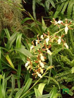 Súťaž: http://www.hoya.sk/rady-a-tipy/1433-competition-qflower-lovers-grow-enjoy-it-share-and-winq Viete si správne vybrať orchidey: http://www.hoya.sk/rady-a-tipy/769-viete-si-spravne-vybra-orchidey- Orchidey Phalaenopsis a ich pestovanie: http://www.hoya.sk/rady-a-tipy/1419-orchidey-phalaenopsis-a-ich-pestovanie Orchidey po nákupe: http://www.hoya.sk/rady-a-tipy/1418- Výstava orchideí v Klosterneuburgu: http://www.hoya.sk/rady-a-tipy/1416-vystava-orchidei-v-klosterneuburgu
