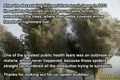 Spiders after tsunami