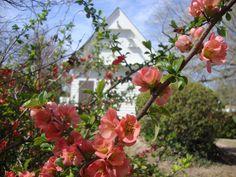 spring bloom | williamsburg va