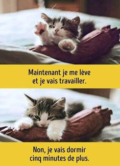 Maintenant je me lève et je vais travailler Cute Baby Animals, Animals And Pets, Funny Animals, Kittens Cutest, Cats And Kittens, Cat Work, Cat Couple, Funny Cats And Dogs, Little Pets