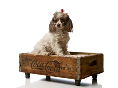 Coca Cola Luxury Vintage Pet Bed by CharlieHeartsDiesel on Etsy, $240.00---i think id do it myself first!