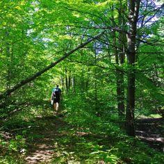 An Easy Hike on the Oak Ridges Moraine Trail - Hike Bike Travel Rice Lake, Discover Canada, Sand And Gravel, Oak Ridge, Rustic Italian, Hiking Trails, Ontario, Vines, Tourism