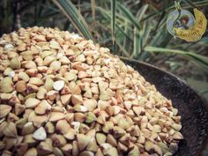 Buckwheat, Rice, Plants, Planters, Plant, Planting