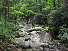 river runs through roaring fork nature trail
