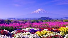 Spring in Japan wallpapers | Wallpapers, Backgrounds, Images, Art ...