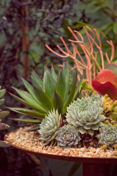 Succulent planting that looks like a science fiction setting
