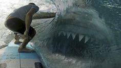 Fotografia divulgada pode provar que um Megalodon de 50 toneladas ainda exista nos oceanos ~ Sempre Questione