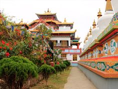 Book your Sikkim tour and make your journey luxury and memorable with us. Search complete information about Sikkim Tour Package booking availability and prices. International Airlines, International Flights, Cheap Air Tickets, Tourism Department, Flower Festival, Best Travel Deals, Domestic Flights, Darjeeling, India Travel