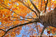Fall in Savannah --- Colonial Park Cemetery --- Ally Dodd Photography
