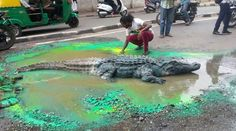 Artiste Gets crocodile on Road to Seek Civic Authorities Attention in Bengaluru