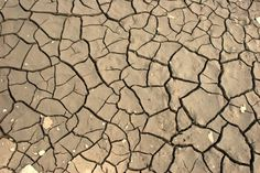 How To Create A Drought Friendly Yard