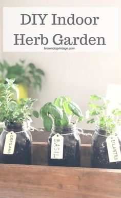 DIY Indoor Herb Garden - A simple DIY to give you fresh herbs all summer! #gardening #browndogvintage