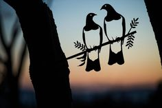 Add a bird silhouettes from Metalbird to your own landscape or give on as a gift. View the collection and get one today. Wood Pigeon, Weathering Steel, Flax Flowers, Forest Habitat, Misty Eyes, Bird Stencil, Metal Garden Art, Metal Art, Wedding Boxes
