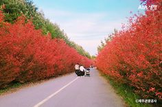 Jeju Island, Rose Wallpaper, Travel Info, Beautiful Places To Visit, Red Roses, Life Hacks, Scenery, Country Roads, Korea