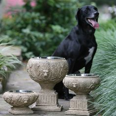 Beautifully Crafted Dog Bowls