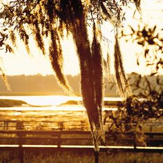 Marsh and Spanish Moss in Beaufort, SC