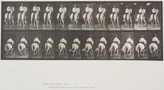 Eadweard Muybridge (American, b. England, 1830-1904)  Plate 604 from Animal Locomotion, 1887  'Elberon' trotting, saddled.   Collotype on paper, 13-1/2 x 19-9/16 in.   Gift of Mrs. Jill Tane.  1995.16.20