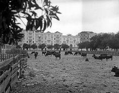 Mercado Geral de Gados 8 ao fundo a Av. 5 de Outubro). 1952. Judah Benoliel