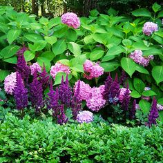 hydrangea with boxwood and astilbe