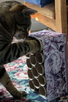 "Here's a cool DIY idea for a cat enrichment toy that I stumbled upon this morning. Glue together a group of toilet rolls inside a tissue box and randomly fill the tubes with treats. Your cat will be stimulated when they ""hunt"" for a treat. So simple and inexpensive!!"