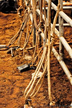 Bull Ropes by Al Braunworth, via Flickr, can't wait till I got my rope