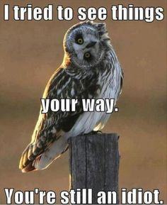 Funny Owl thinks you are an idiot!