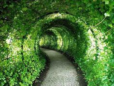 Green Tunnel (Castle Garden, UK)