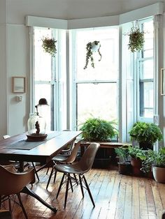 Green potted plants and wooden floorboards...stylish, carefree elegance.